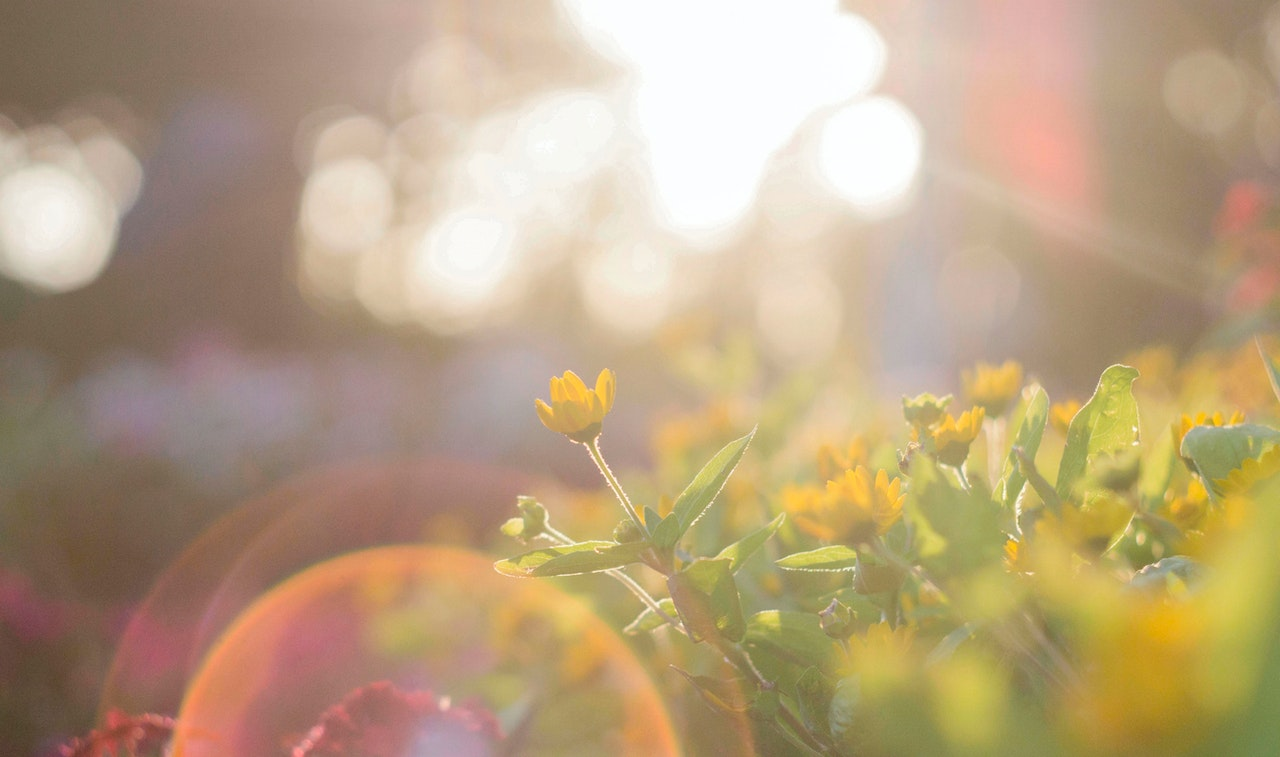 light reflecting on flowers representing awareness as a mindfulness practice