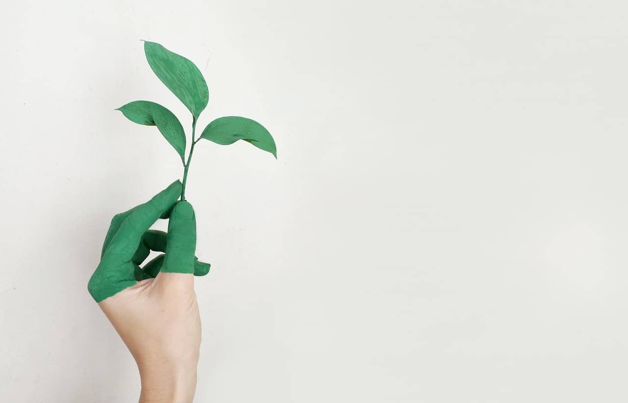 hand with green painted fingers holds three leaf plant to represent sustainable sex toys